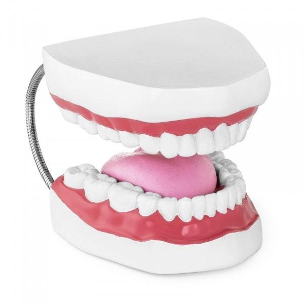 Factory second Teeth Model - Set of Teeth