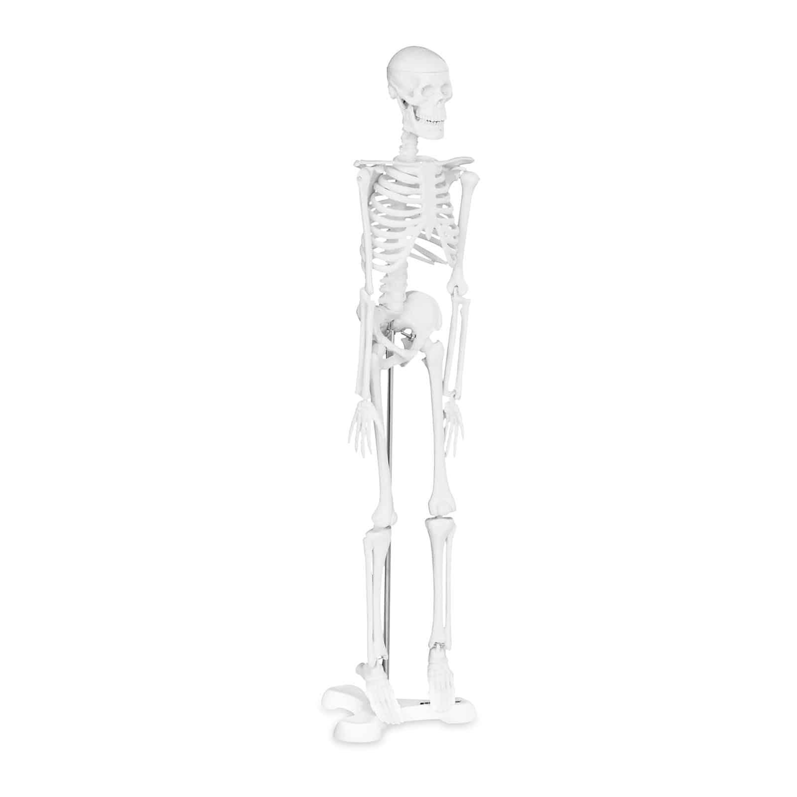 Model szkieletu człowieka - 47 cm