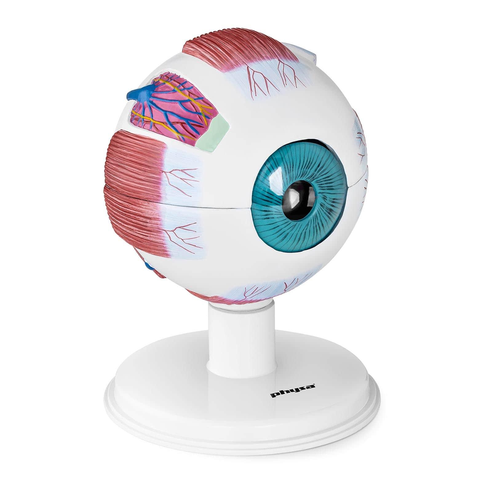 Model oka ludzkiego